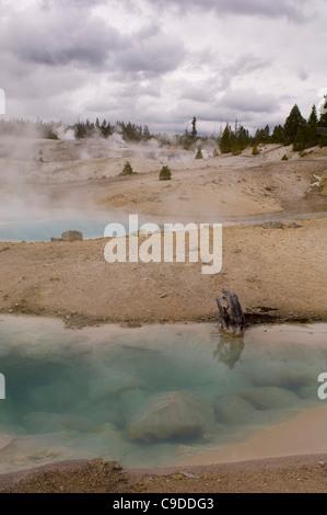 Steam emitting from geysers, Norris Geyser Basin, Yellowstone National Park, Wyoming, USA - Stock Photo