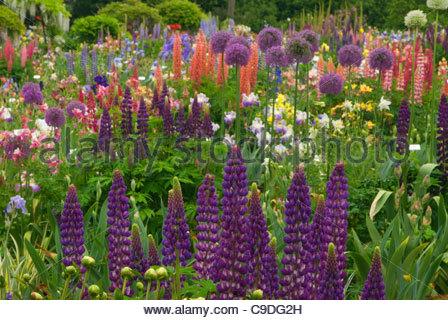 Iris Display Garden Schreiner 39 S Iris Gardens Marion
