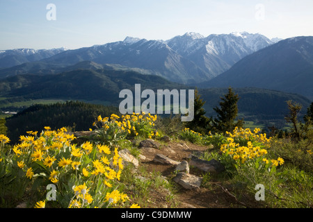 WASHINGTON - Overlooking the Wenatchee River Valley from the balsamroot covered summit of Sauer Mountain near Peshastin. - Stock Photo