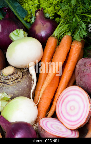 Mixed vegetables: turnips, carrots, swede, beetroots and red onions - Stock Photo
