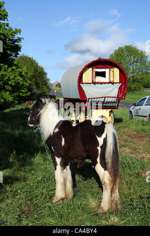 """Vardo Caravan Traditional horse-drawn Gypsy caravans or """"Bow Top"""" canvas covered Wagons en-route to the annual gathering - Stock Photo"""