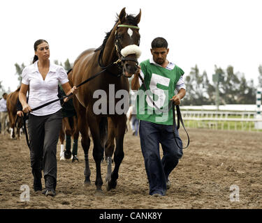 March 31, 2012 - Hallandale Beach, Florida, U.S. - Grace Hall being led to the saddling paddock for the Gulfstream - Stock Photo