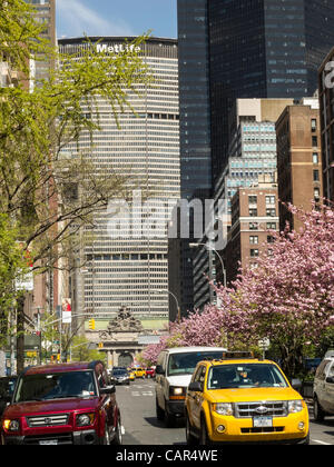 New York, NY - 9 Apr 2012 - Cherry trees are in full bloom along Park Avenue in the Murray Hill neighborhood, just - Stock Photo