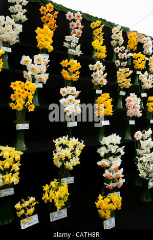 Floral Marquee exhibit on Friday 20 April 2012, the first day of the RHS Show Cardiff in Bute Park, Wales, UK.  - Stock Photo