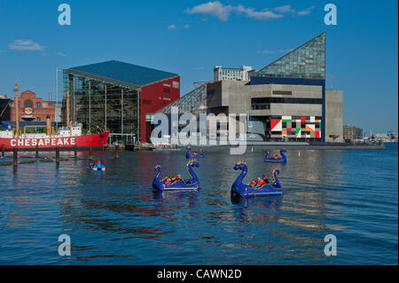 Baltimore, USA. 27 April, 2012. Brightly colored Paddle boats called Chessie Dragons are a popular activity on the - Stock Photo