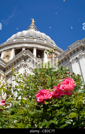 London - roses by st. Paul cathedral - Stock Photo