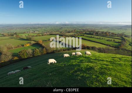 View from Glastonbury Tor. Somerset. England. UK.