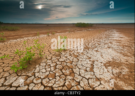 Cracked soil in Sarigua National park (desert) in the Herrera province, Republic of Panama. - Stock Photo