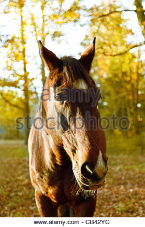Horse in autumn evening - Stock Photo