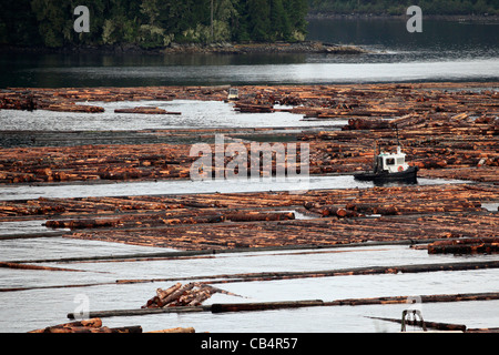 Logs float on the inlet near Telegraph Cove. - Stock Photo