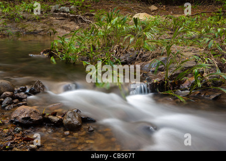 River stream beside the old overgrown Camino Real trail in Portobelo national park, Republic of Panama. - Stock Photo