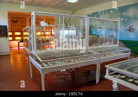 Africa, Mozambique. Capital city of Maputo, Museum of Natural History. Seashell collection. - Stock Photo