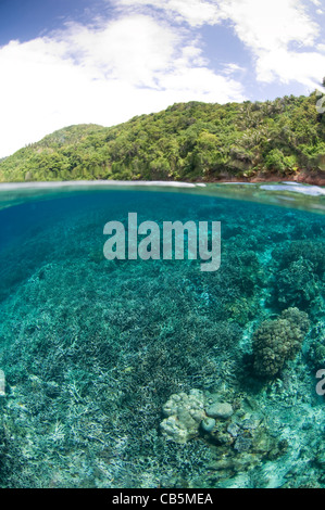 Split photo of a hard coral garden and Lembeh Island, Manado North Sulawesi Indonesia - Stock Photo