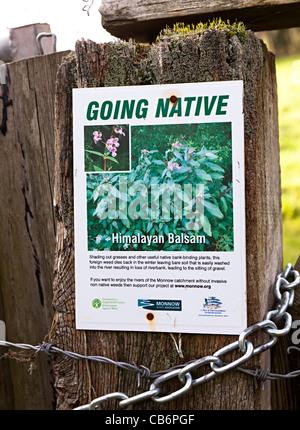 Warning poster about proliferation of Himalayan Balsam (Impatiens glandulifera) plants Monmouthshire UK
