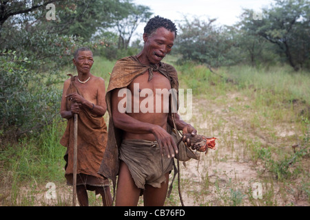 Elderly woman and Bushman / San showing roots and in the Kalahari desert near Ghanzi, Botswana, Africa - Stock Photo