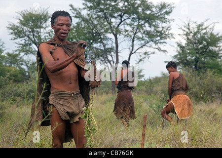 Bushman / San gathering roots for food in the Kalahari desert near Ghanzi, Botswana, Africa - Stock Photo