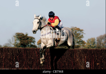 Rider pictured during point-to-point horse racing event over jumps - Stock Photo