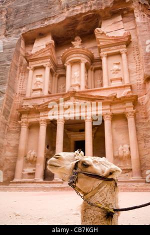 Camel in front of 'The Treasury': Al Khazneh / El Khazneh, at the lost city of Petra in Jordan. - Stock Photo