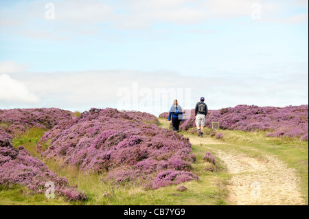 Walkers on path north out of the Hole of Horcum over heather covered Goathland Moor in North York Moors National - Stock Photo