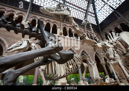 Oxford University Museum of Natural History, Oxford, UK - Stock Photo