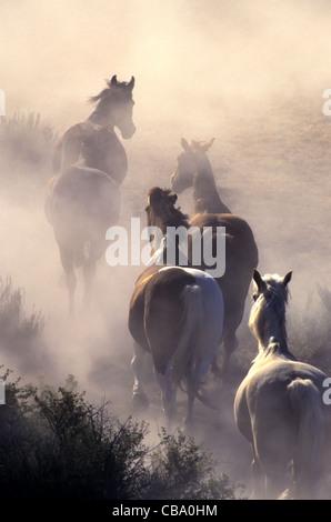 Horses stampeding, enveloped in dust. - Stock Photo