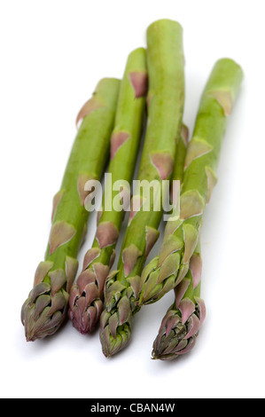 a small bundle of harvested asparagus spears isolated on a white background - Stock Photo
