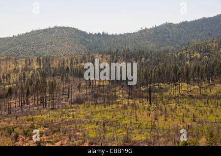 Forest fire at Big Oak Flat, Yosemite National Park, California, USA. Photo copyright Lee Foster. Photo # california120705 - Stock Photo