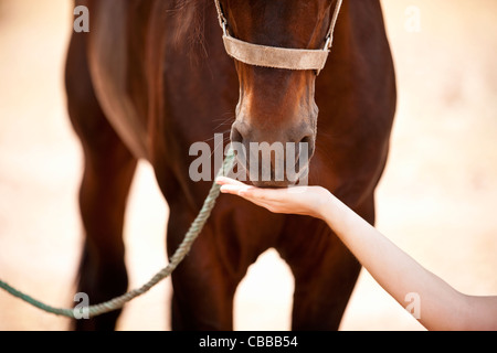 A woman feeding a horse, close-up - Stock Photo