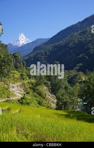 Trek from Ghandruk to Nayapul, views of Machhapuchhare, Fish Tail, Annapurna Sanctuary Region, Nepal, Asia - Stock Photo