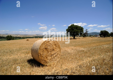 italy, basilicata, countryside, agri valley, hay bales - Stock Photo