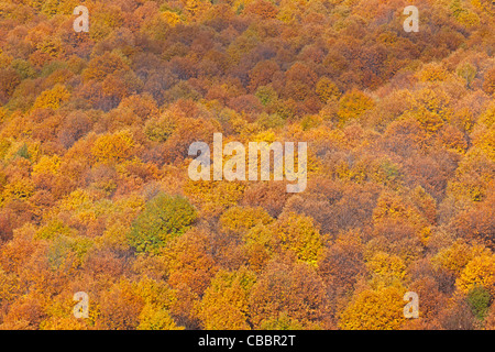 Colourful autumn forest - Stock Photo
