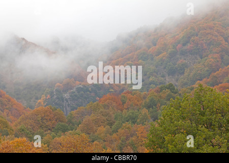 Colourful autumn forest with clouds - Stock Photo