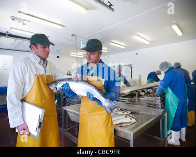 Fishmongers with catch of the day - Stock Photo