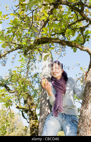 Woman picking apples in orchard - Stock Photo
