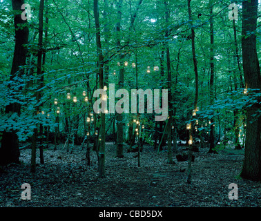 Lights hanging from trees in forest - Stock Photo