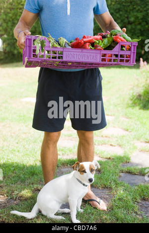 Male standing outdoors with dog, carrying crate full of fresh vegetables - Stock Photo