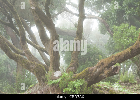 Mossy tree growing in foggy forest - Stock Photo