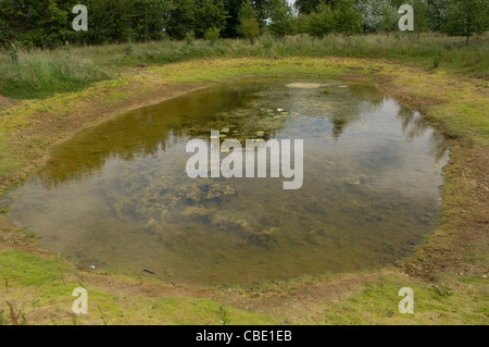 Landscape view of stagnant pond with lily pads in a field - Stock Photo