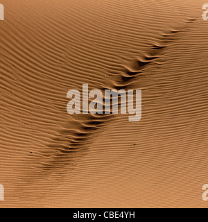 Car Tracks In The Sand Of The Namib Desert, Iona National Park, Angola - Stock Photo