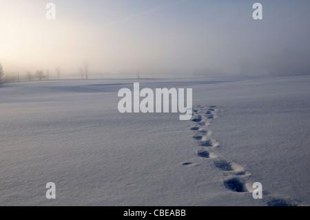 Footprints or animal tracks across a snowy field - Stock Photo