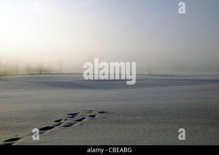 Footprints or animal tracks across a snowy field leading nowhere - Stock Photo