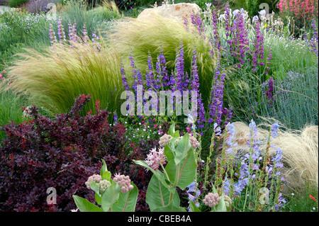 Penstemon Garden - Stock Photo