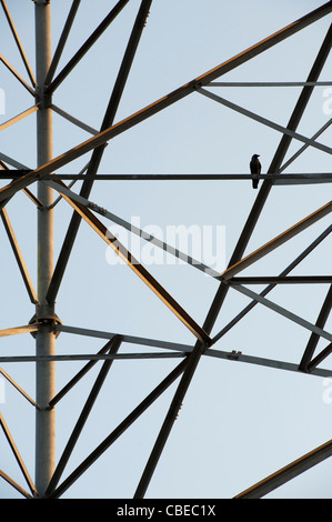 Bird sat on a Indian telecommunications tower abstract. India - Stock Photo
