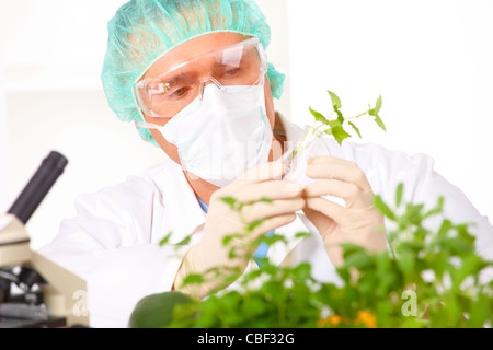 Researcher holding up a GMO vegetable in the laboratory - Stock Photo