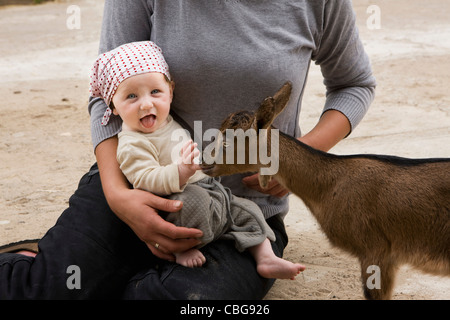 A goat nibbling on a baby's finger - Stock Photo