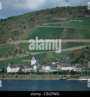 Vineyards above the village of Kaub in the Rhine Valley, Germany - Stock Photo