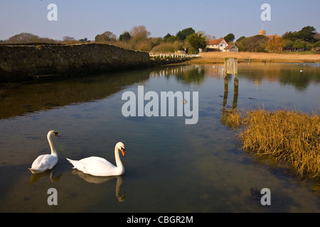 Birds, Swans, The Causeway, River Yar, Freshwater, Isle of Wight, England, UK, - Stock Photo