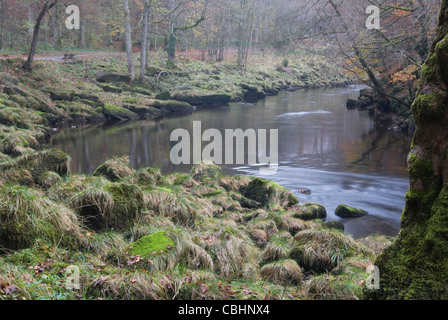 The River Wharfe in Strid Woods in autumn. - Stock Photo