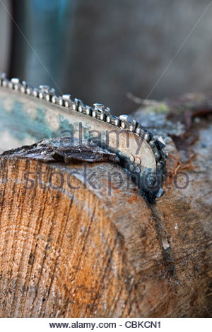 Cutting logs using a chainsaw - Stock Photo