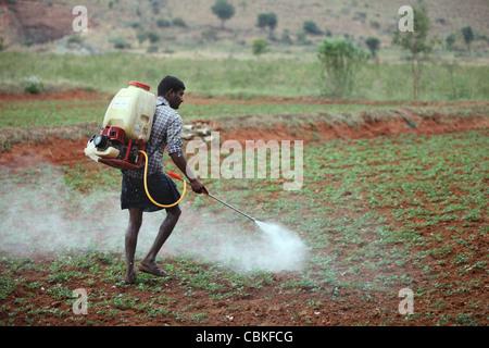 Indian man spraying pesticide unprotected Andhra Pradesh South India - Stock Photo